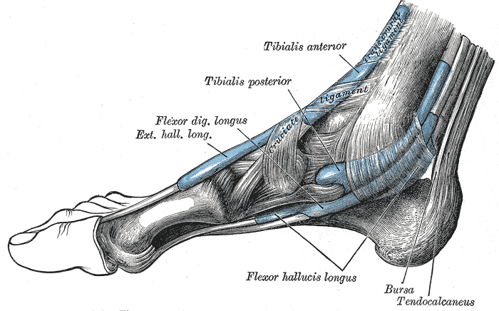 Foot Pain Diagram