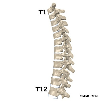 Upper Back Pain Spinal Column