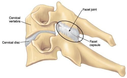 Cervica lFacet Joint