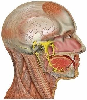Trigeminal Neuralgia skull