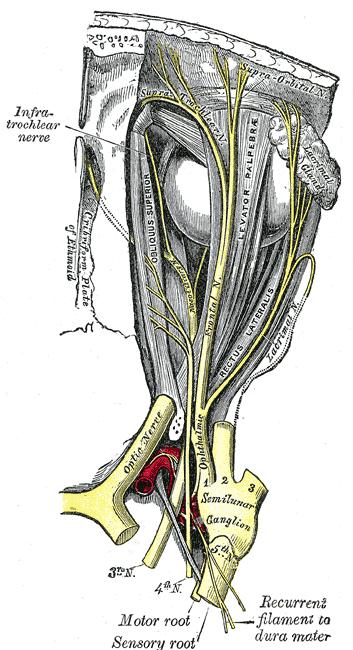 Trigeminal Neuralgia Nevada Pain Las Vegas Henderson