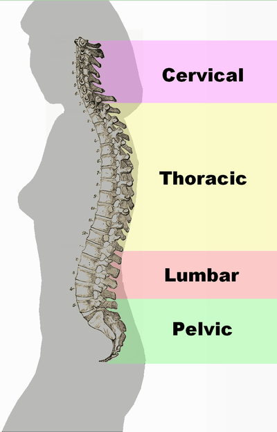 Spinal Column - Adhesiolysis