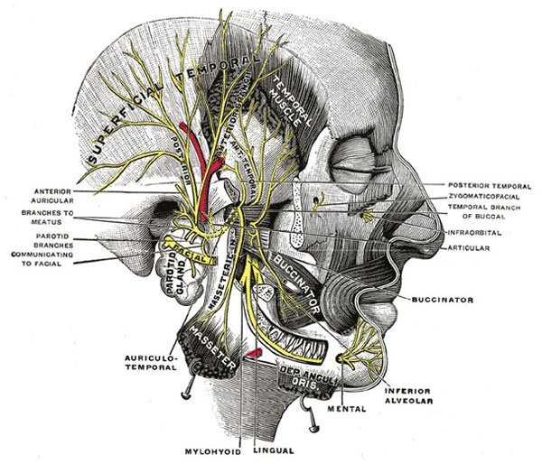 Migrain Headache Diagram