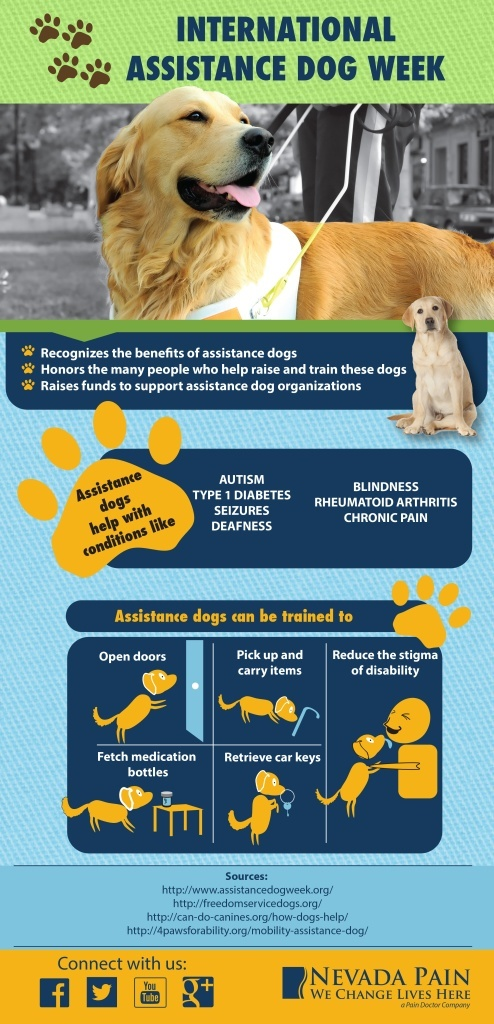 dog assistance infographic
